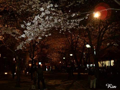 京都20060401.jpg