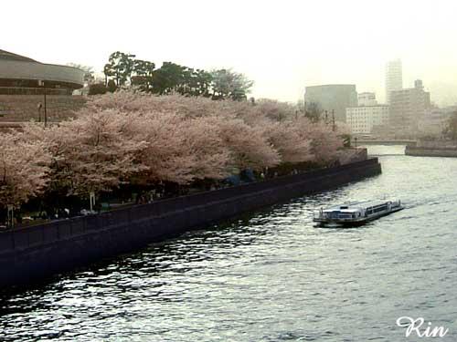 水の都-桜200604.jpg